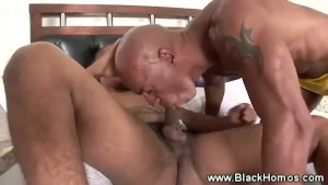 Black homos give each other blowjobs